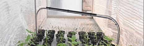 Line Quantum in Greenhouse