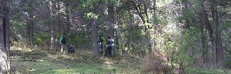 PAR Measurements Characterize Tree Coverages