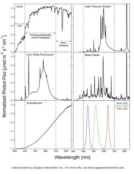 Spectral output of different light sources
