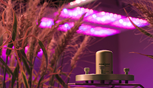 Apogee Instruments' quantum sensor measure photosyntheticall active radiation, PAR