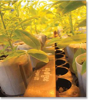 Quantum Sensors and Meters - line quantum under a plant canopy
